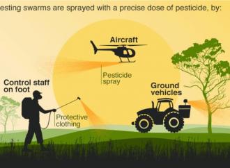 Sciami di locuste hanno raggiunto il Tanzania e il Sudan del Sud
