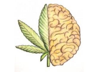 In compagnia  la cannabis  fa bene. Pare