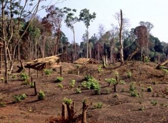La Cambogia ha perso il 26% delle sue foreste