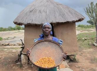 Tre quarti degli africani non si possono permettere una dieta sana