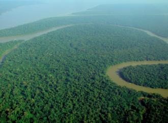 """La Amazonia no es un """"pulmón verde"""" y mucho menos un paraíso"""