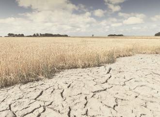 Cambiamento climatico e biodiversità