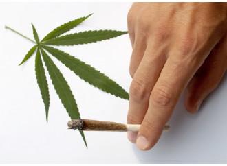 Cannabis, cascano tutti i pretesti della legalizzazione