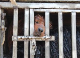 Cani, da piatto prelibato a animali da compagnia. La Cina a una svolta