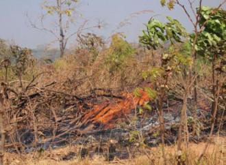 La foresta tropicale africana brucia, o forse no